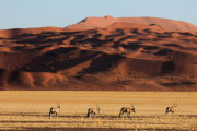 Best Namibia Tours