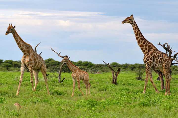 Best Namibia Safaris